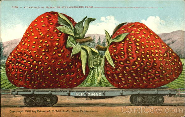 A California Of Mammoth Strawberries Fruit
