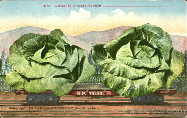 A Carload Of Cabbages Vegetables