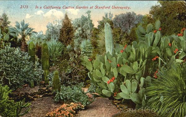 In A California Cactus Garden, Stanford University. In A California Cactus  Garden, Stanford University