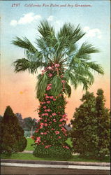 California Fan Palm And Ivy Geranium