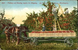 Picking And Hauling Apples For Shipping Postcard