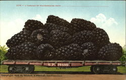 A Carload Of Blackberries Postcard