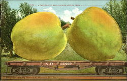 A Carload Of Bellflower Apples Postcard