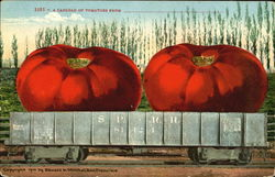 A Carload Of Tomatoes Postcard