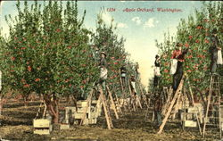 Apple Orchard Postcard