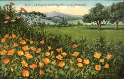 A Field Of California Poppies In Midwinter Postcard