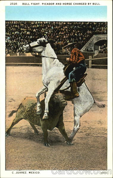 Bull Fight Picador And Horse Charged By Bull C. Juarez Mexico