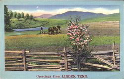Greetings From Linden