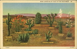 Many Varieties of Cacti of the Southwest