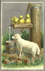 Lamb drinking from well bucket, chicks watching
