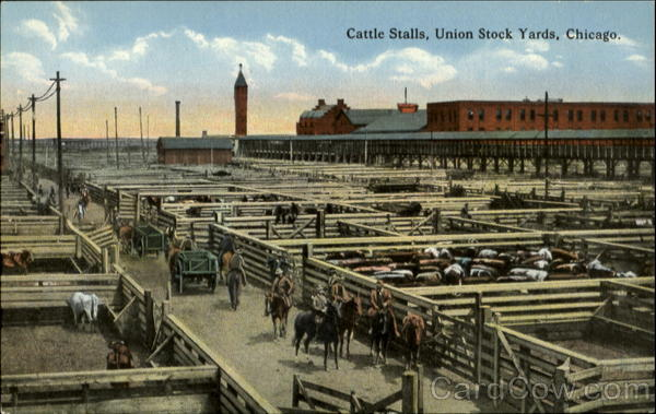 Cattle Stalls, Union Stock Yards Chicago Illinois