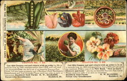 New Hybridized Potato Seed Postcard