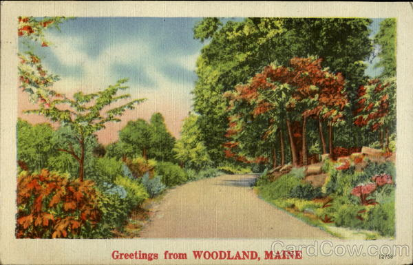 Greetings from Woodland Maine