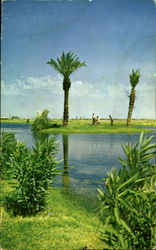 Lake with Palm Tree