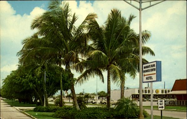 Coconut Palms Along Margate Boulevard Florida