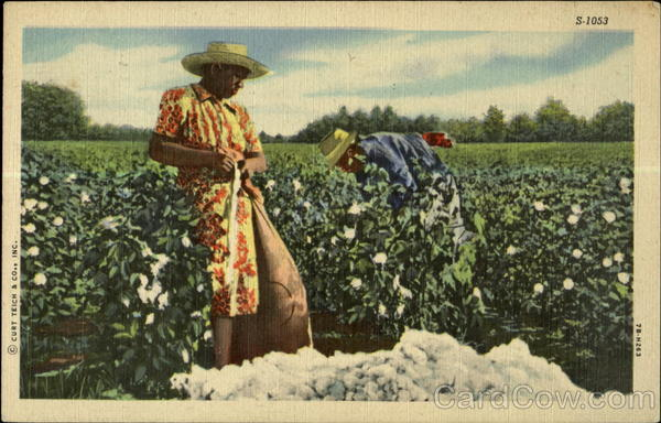 Cotton Picking Scene Black Americana
