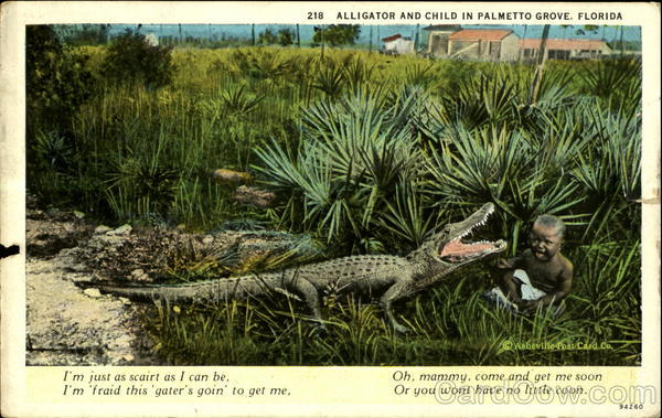 Alligator and Child in Palmetto Grove Florida
