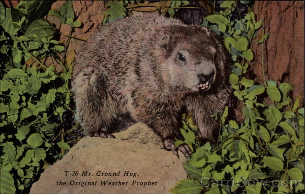 Mr. Ground Hog the original weather prophet