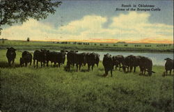 Ranch in Oklahoma, Home of the Brangus Cattle