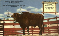 The Only Texas Longhorn Steer in the Southwest
