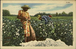 Cotton Picking Scene