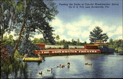 Feeding the Ducks at Colorful Weekiwachee Spring on U.S. #19