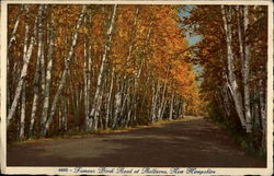 Famous Birch Road at Shelburne, New Hampshire