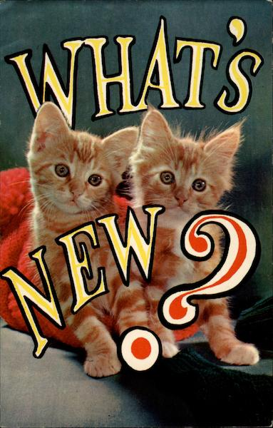 What's New? Cats