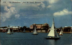"""The Bermudiana"" Postcard"