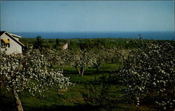 Springhill Orchards
