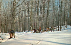 Maple Sugar Time in Vermont (Gathering Sap)