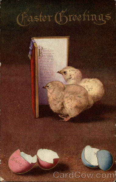 Chicks Reading A Book Postcard