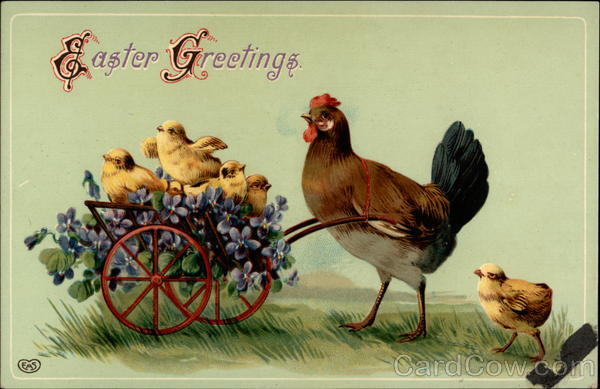 A Hen Walking a Wheel Barrel Full Of Chicks With Chicks