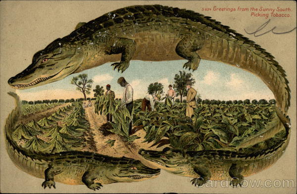 Alligator Border S 634 Alligators Fancy Borders