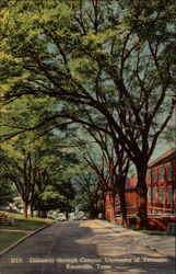 Driveway through Campus, University of Tennessee