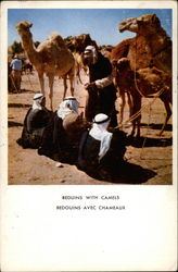 Beduins With Camels
