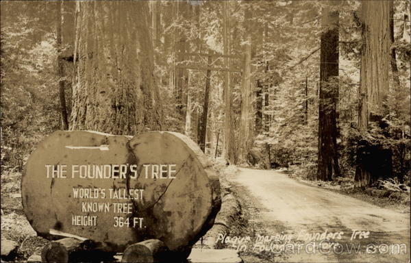 The Founders Tree Humboldt Redwoods States Park California