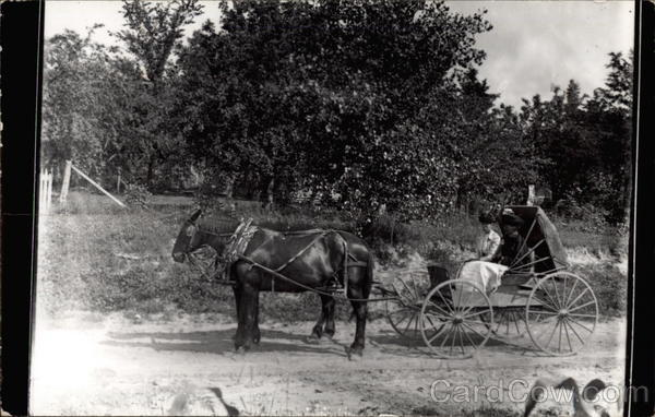 Couple Out for a Ride in a Horse and Carriage Horses