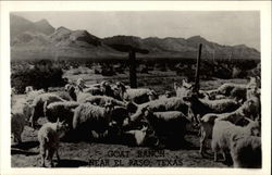 Goat Ranch