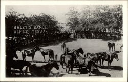 Haley's Ranch