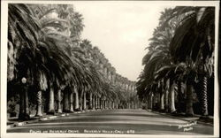 Palms on Beverly Drive