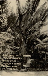 Giant Traveler Palm with Edison's Wheel Chair