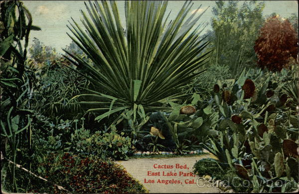 Cactus Bed, East Lake Park Los Angeles California