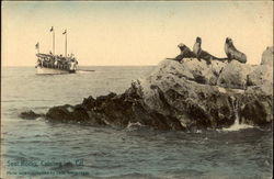 Seal Rocks Postcard