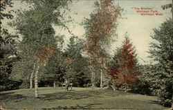The Birches, Whitman Park