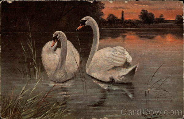 Two Swans on the Water Birds
