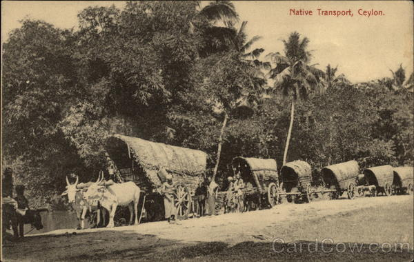 Native Transport Ceylon Southeast Asia