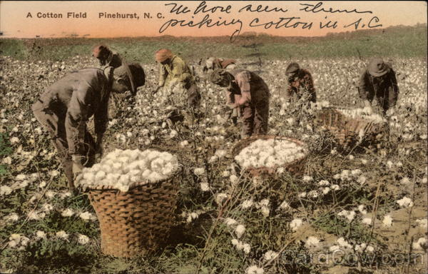 A Cotton Field Pinehurst North Carolina Black Americana