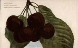 Kallich's Giant Cherry-Natural Size