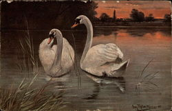Two Swans on the Water